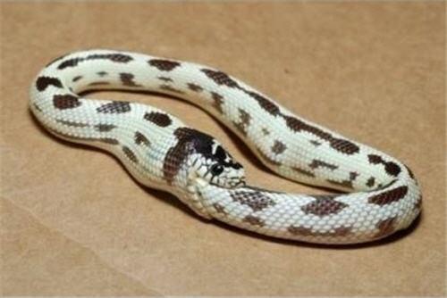 Snake-eats-itself.jpg